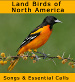 Land Birds of North America songpack