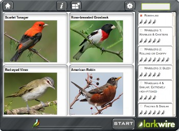 Robin-like gallery game